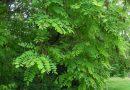 Invanzivnost biljaka