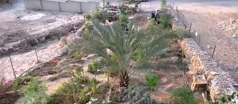 Vrt u pustinji