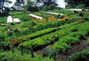 7. Intenzivni sistemi malih razmera – izvorni permakulturni princip
