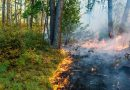 Izgubljeni šumski vrtovi Evrope