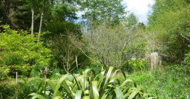 Tečaj dizajniranja šumskog vrta, 12. – 20.2.2021.
