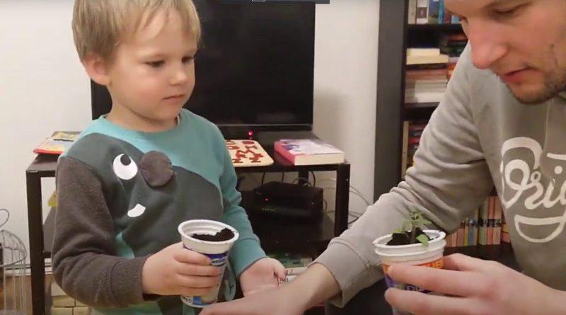 Pikiranje presadnica uz pomoć djeteta