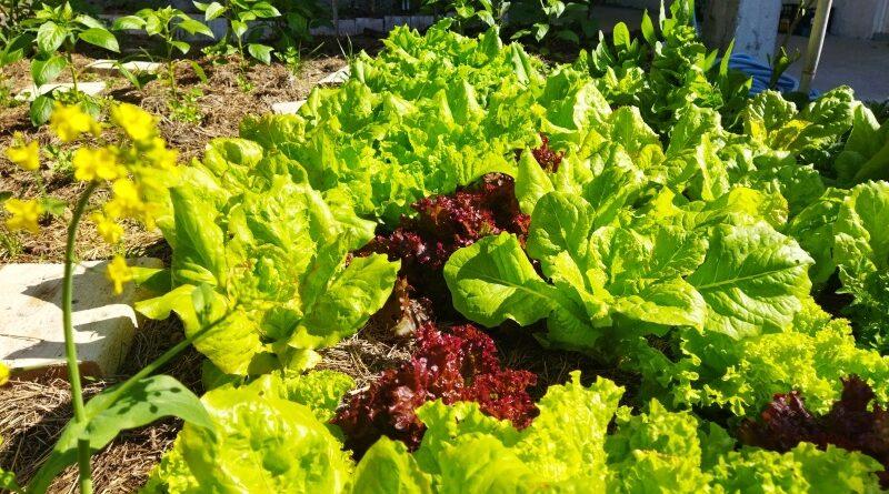 Vrtlarenje u skladu sa prirodom – najbitniji elementi potpuno organskog vrta