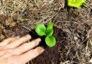 Prirodno vrtlarstvo – svjesnost kao X faktor uspješnog gajenja biljaka